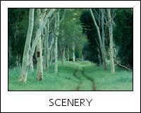 SA-KR-fever tree forest-09-0001.jpg